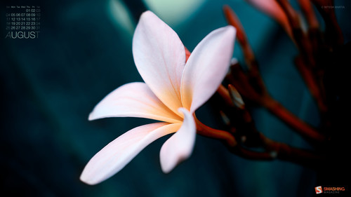 The Balinese Flower